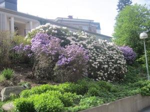 Sahlgrenska Universitetssykehus
