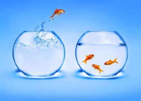 Gullfisk hopper, lite