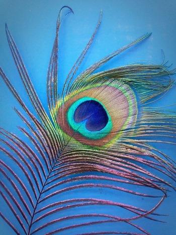 peacock-826972_960_720