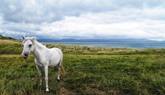 horse-58374_960_720.jpg